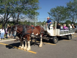 Clydesdale hayride