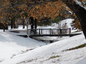 Winter Green Belt